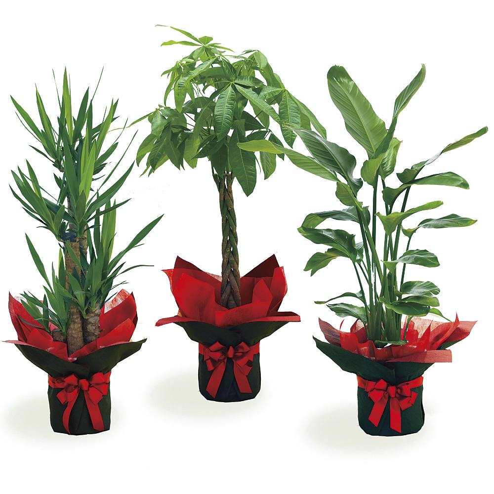 観葉植物お任せギフト